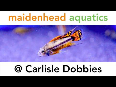 Maidenhead Aquatics @ Carlisle Dobbies