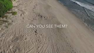 MiSHELL - A Self Aware Drone for Sea Turtle Conservation