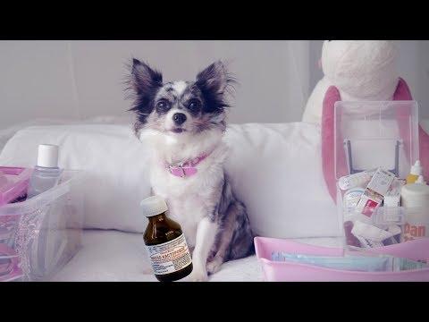 Ветеринарная аптечка для собаки | Чихуахуа Софи