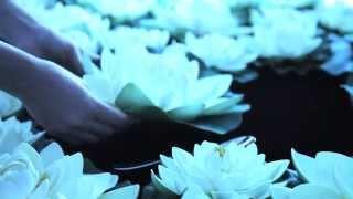 Video Luminarc Lotusia Dinnerware