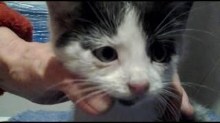 Спасают котенка от болезни глас/ Тигруша и Чернушка pets