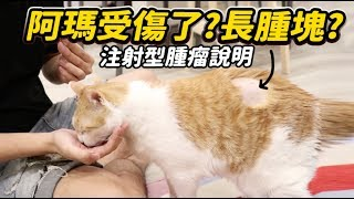 【阿瑪受傷了?長腫塊?注射型腫瘤說明】志銘與狸貓