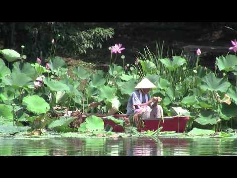 Picking lotus in USA