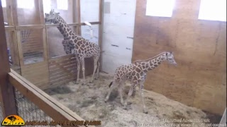 Animal Adventure Park Live Stream thumbnail