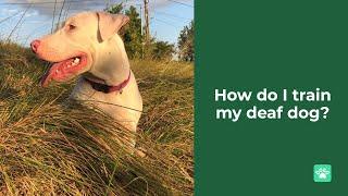 How do I train my deaf dog?