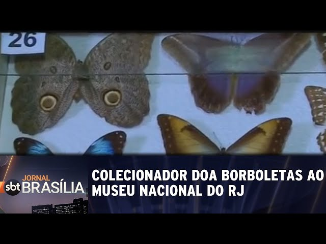 Colecionador doa borboletas ao Museu Nacional do RJ | Jornal SBT Brasília 22/02/2019