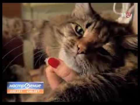 Кого кот больше любит