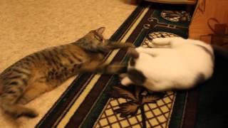 добрые коты)