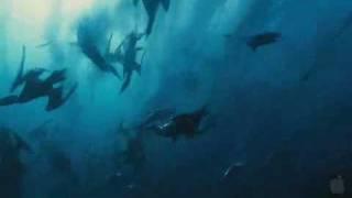 Wild Ocean 3D (Trailer engl.)
