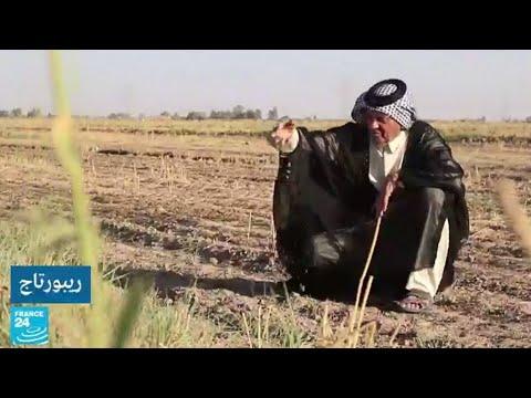 العراق: مزارعون يحذرون من اختفاء أرز -العنبر- بشكل كامل بسبب نقص المياه  - نشر قبل 8 ساعة