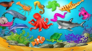Learn Sea Animals Names & Sounds For Kids Children - Learn Animals Body Parts | Nursery Rhymes
