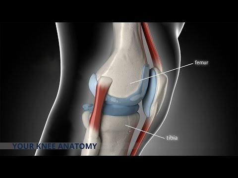 Anterior Cruciate Ligament (ACL) Repair