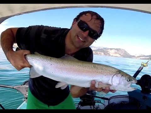Kalamalka Lake Rainbow Trout Steelhead