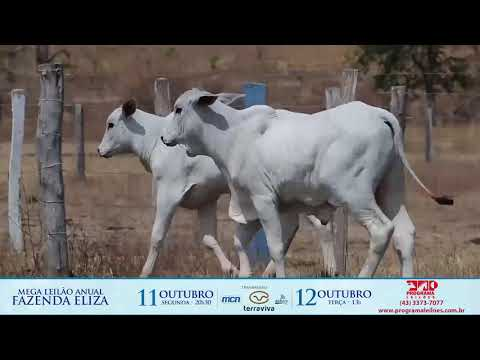 LOTE 46