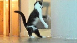 The Nutcracker by Kodi the Cat