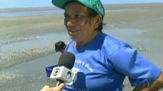 Praia da Requenguela no Bom Dia Brasil 03-02-2010.mp4