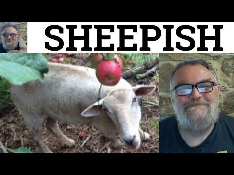 Sheepish Meaning Sheepishly Explained Sheepish English Vocabulary CAE CPE IELTS
