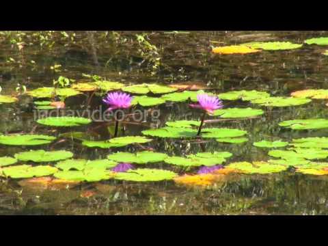 Pookot Lake - a freshwater lake in Wayanad