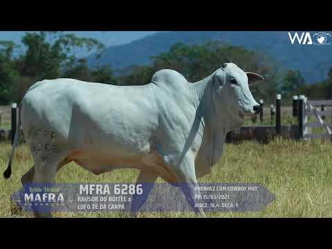 LOTE 12   MFRA 6286