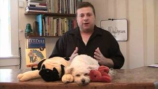 Dog Daycare Business - How To Get Customers For Your Dog Daycare Business