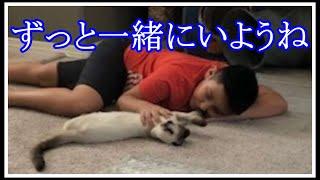 【奇跡】大好きな愛猫が行方不明!悲しみに暮れた少年がある家を訪れると、そこには驚きの光景があった!【涙溢れる話】