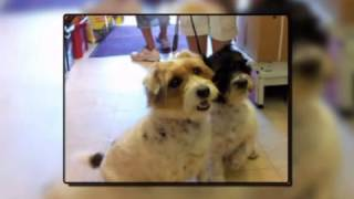 Pet Shops & Dog & Cat Grooming - Pets Corner