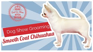 Dog Show Grooming: How To Groom A Smooth Coat Chihuahua