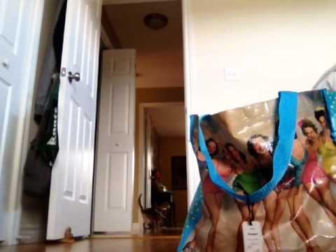 Harry the Siamese