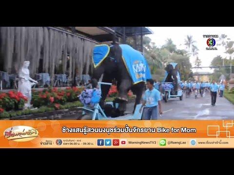 เรื่องเล่าเช้านี้ ช้างแสนรู้สวนนงนุชร่วมปั่นจักรยาน Bike for Mom (17 ส.ค.58)