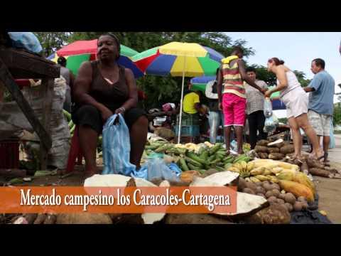 Desde la Vereda a la Ciudad_Mercado Campesino_CULTIVAR ALIMENTOS ES COSECHAR PAZ