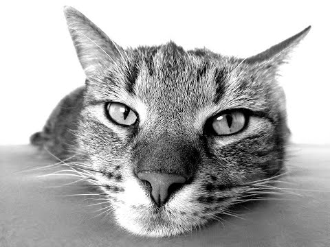 Funny Cat Series Collection 29