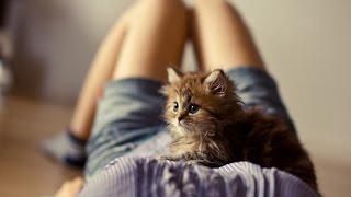 Смешные картинки про кошек и котят Выпуск №52  FUNNY CATS СМЕШНЫЕ КОШКИ