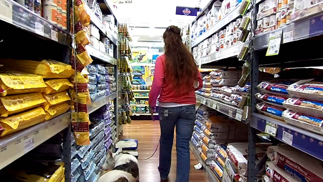 Deaf Dog Edward Goes Shopping at Pet Supplies Store Dogtra Remote