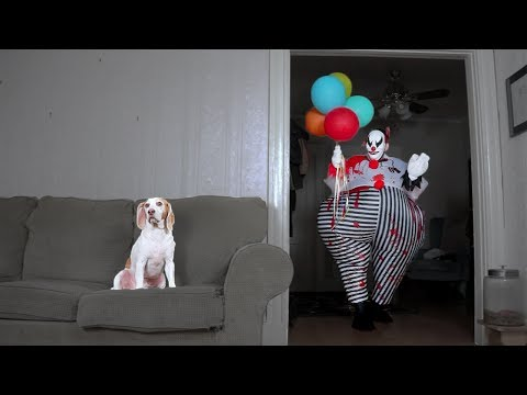 Dog Takes Down Scary Clown: Cute Dog Maymo