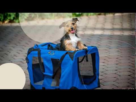 Coolpets Online petshop Johannesburg