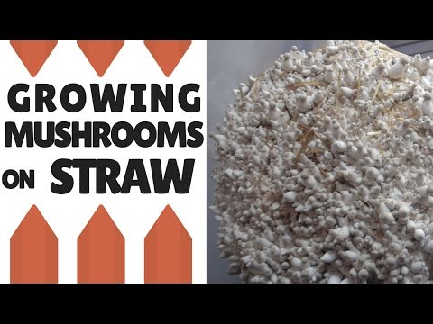 How to Grow Mushrooms on Straw: Making Straw Logs
