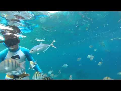 Snorkelen in Isla de Cozumel (Mexico)