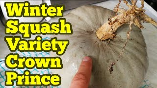 Winter Squash variety Crown Prince