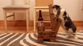 I built my rabbit a cart and now he delivers me beer!