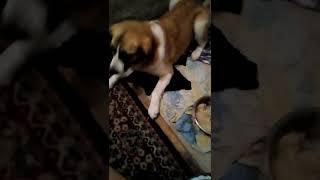 наглый котенок Мурка и тактичная собака Тома
