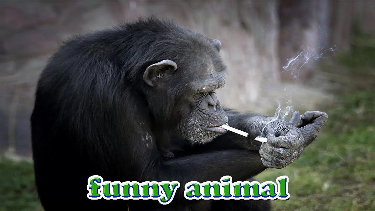 Những con khỉ bá đạo nhất – funny monkey