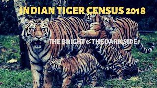 Tiger census 2018 India , the bright & the dark side || Jungle Safari