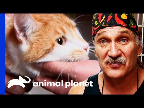 Jeff Removes Dangerous Dental Floss From Cat's Intestines   Dr. Jeff: Rocky Mountain Vet