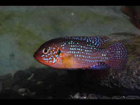 New fish!! Update on Cichlids!