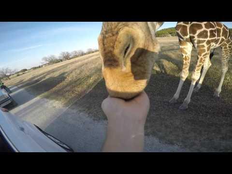 Fossil Rim Wildlife Center Glen Rose, Texas February 13, 2016 Jose And Amaris
