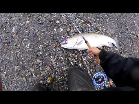 Flyfishing For Juneau Coho 2016