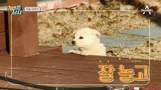 [예능] 개밥주는남자 시즌2 36회_171230 - 병원에 간 뚜이! 엄마가 눈물 펑펑 쏟은 사연은?!