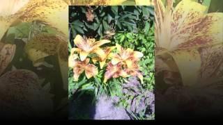 видео Самые цветочные долины мира