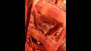 второе видео по выгонке зеленого лука(, 2015-01-25T13:45:33.000Z)