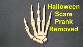 Halloween Wood Skeleton Hand - Scare Removed